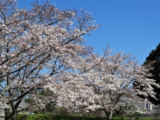 0408-05-kagata.jpg