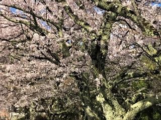 0411-05-kagata.jpg