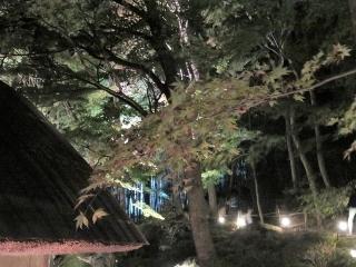 1125-03-kyorin.jpg