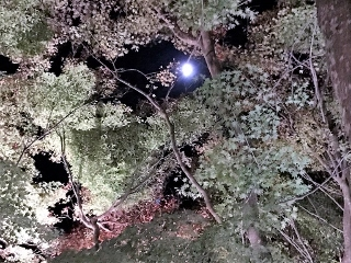 1125-07-kyorin.jpg