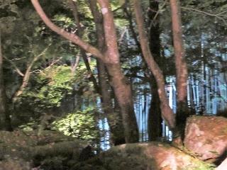 1125-15-kyorin.jpg